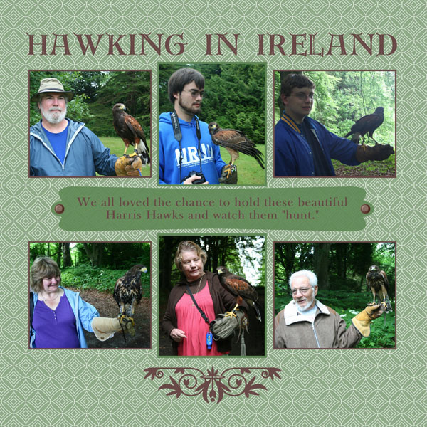 Hawking in ireland sized